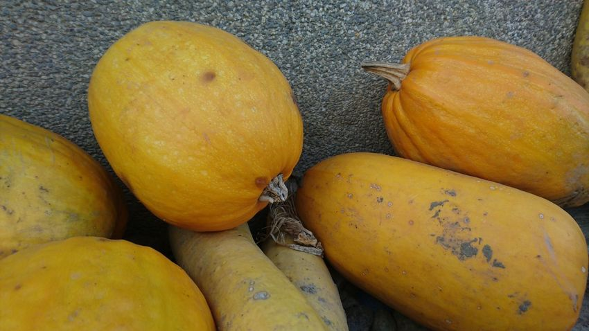 Close-up Contry Living Squash Squashes Yellow