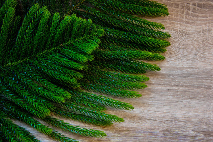High angle view of fern