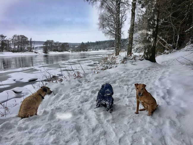 Dog Snow Winter Animal Themes Cold Temperature Pets Domestic Animals