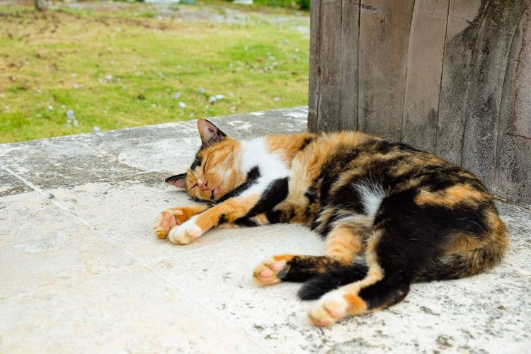 Cat Kitty Animal Themes Sleeping Outdoors Animal No People Day Relaxing