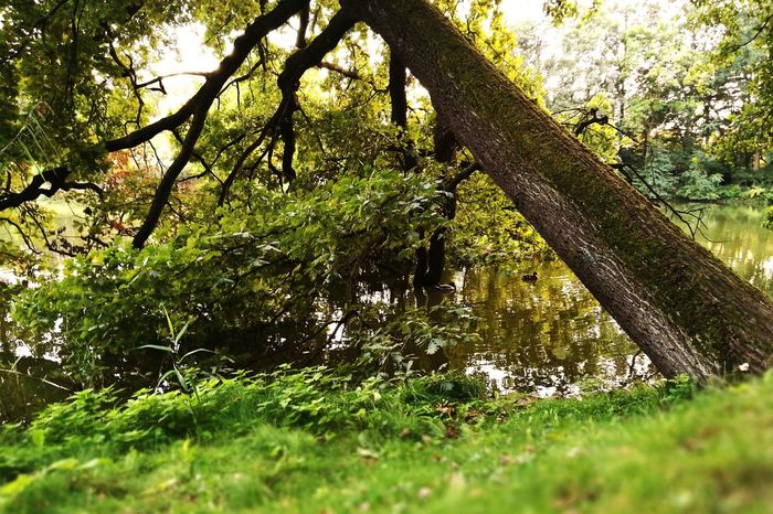 Tree Green Color Nature Beauty In Nature Outdoors Green Lake