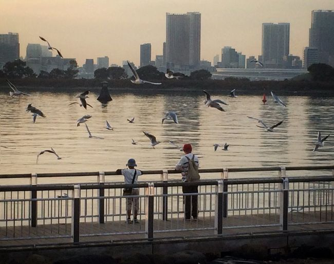 View of birds in city at sunset
