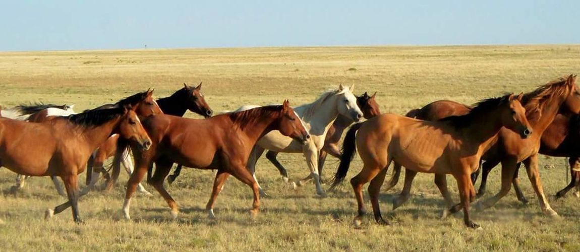 They Went That-away. Horses Horses, FarmLife Running Horse Ranching, Nature, Dusk, Horse, Cattle, Textures
