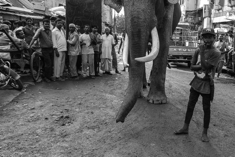 Elephant Large Group Of People Pet Portraits The Week On EyeEm Mix Yourself A Good Time Black And White Friday