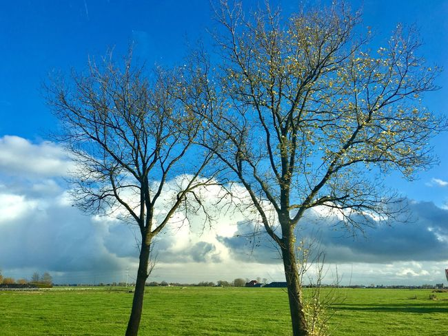 Tree Nature Field Grass Landscape Sky Light And Shadow IPhoneography Netherlands Morning Sky Cloud - Sky Beauty In Nature Nature Trees And Sky Outdoors Beauty In Nature Tranquility Day Rural Scene Scenics No People