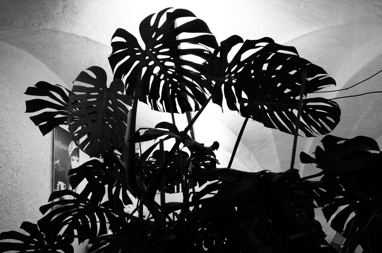 LOW ANGLE VIEW OF SILHOUETTE PLANT GROWING AGAINST WALL