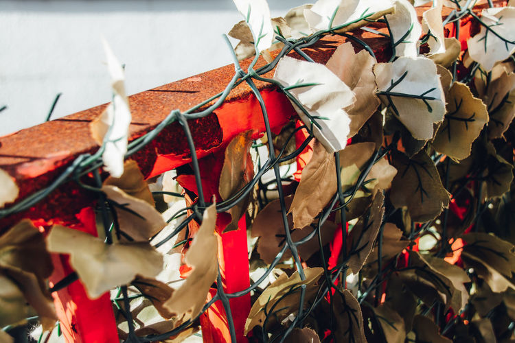 Color Redefining Red Minimal Light And Shadow Fine Art Streetphotography Abstract Exceptional Normalcy Simplicity Japan Retro Nostalgia Street Plant Fence Minimalism Simple Nature Human Vs Nature Close-up No People Decoration Day Leaf Plant Part Focus On Foreground Ribbon Tied Up Selective Focus Outdoors Paper Religion Ribbon - Sewing Item Hanging Art And Craft String Leaves