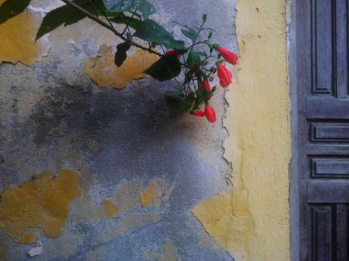 peeling wall with red flowers Peeling Walls Flowers Red Dior Flower Window Box Hanging Ivy Close-up Architecture Building Exterior Built Structure Plant Painted Paint Residential Structure Exterior
