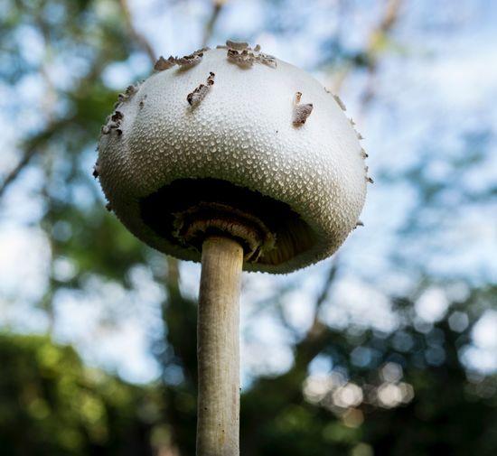 Mushroom from