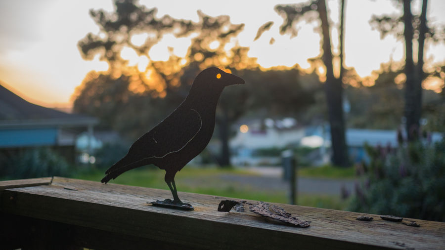 Bird Animal Animal Themes Focus On Foreground Perching No People Sunset Outdoors Tree Statue Ornament