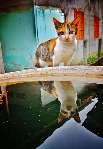 Portrait of cat sitting on a water