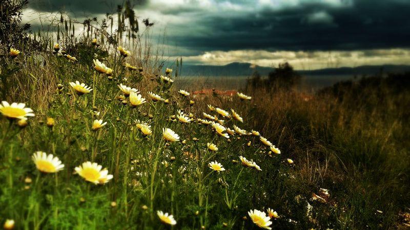 Güzel bir gün Çeşme'den... Flowers Hello World Enjoying Life Taking Photos
