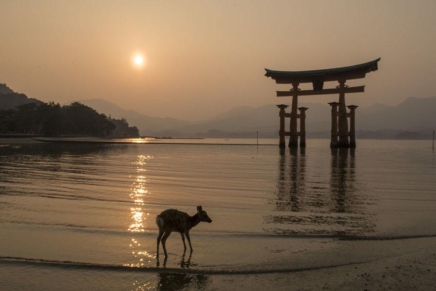 Animal Animal Themes Beauty In Nature Canine Dog Domestic Domestic Animals Lake Mammal Nature One Animal Pets Reflection Scenics - Nature Silhouette Sky Sun Sunset Vertebrate Water