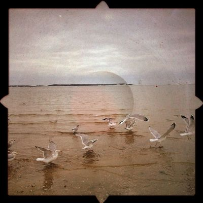 Seagulls | edited with the new iPhone app, Viewmatic. Viewmatic