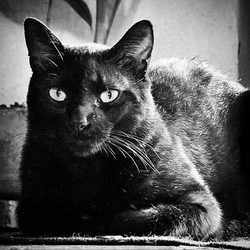 El bicho que más quiero en casa. Cats Cat Lovers Funny House Pet Gatos Adorables