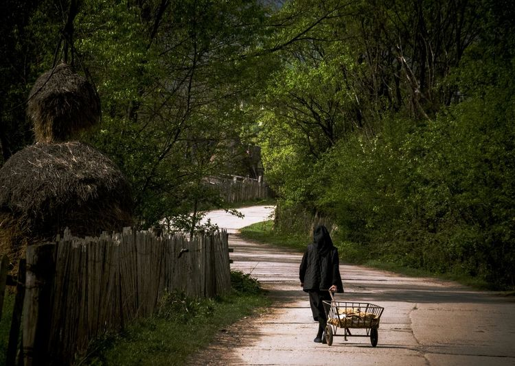 Full length rear view of man walking in park