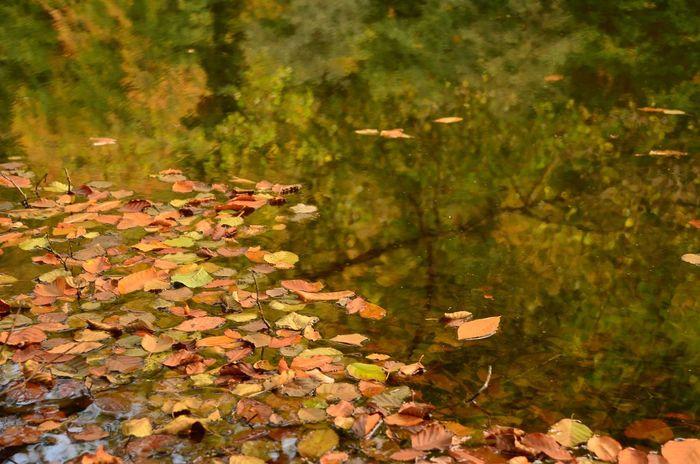Fall Yedigoller Yedigöllermilliparkı Lagoon Yellow Leaves Yellow Leafs Leaf Leafs Leaf 🍂