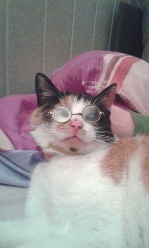 """ Babunia Pusia :D "" Glasses Cat Nightphotography Hand Olivia"
