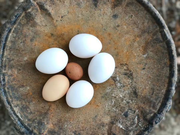 Eggs Organic Farm Life Brown Eggs White Eggs Speckled Egg Rooster Egg Yolk-less Egg No People Close-up Freshness Healthy Eating Nature Food