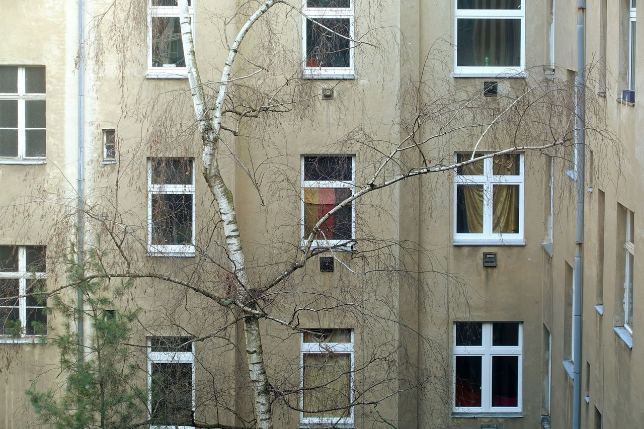 Bare Tree In Front Of Apartment Building