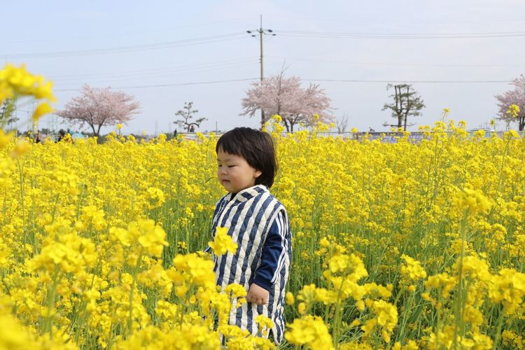 Cute toddler girl on field