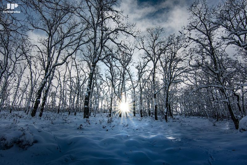 White forest Snow Cold Temperature Winter Tree Nature Forest Beauty In Nature Sun Sunlight Outdoors WoodLand Scenics Tranquility Frozen Landscape No People Cloud - Sky