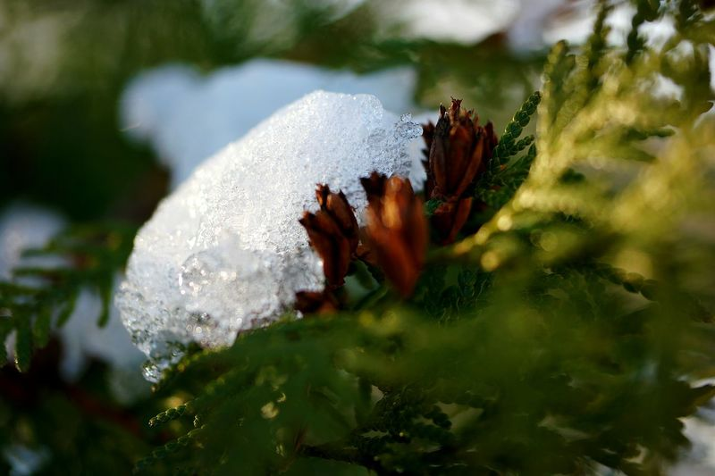 Nature On Your Doorstep Naturelovers Winter_collection Winter Bushes Nature Nature_collection Nature Photography Iced Icedwater Icedrops February 2016 Showcase February Macro_collection Macro Photography Macro World Macro Nature Macro Beauty Ice Crystals Nature Lover Nature_collection Winter Trees