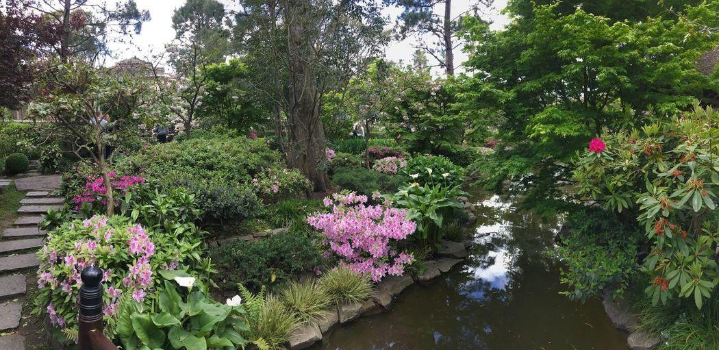 Jardín Japonés,