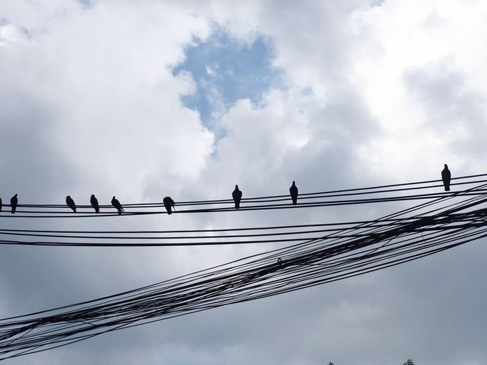 in the line Low Angle View Bird Cloud - Sky Animals In The Wild Sky Cable Animal Themes Connection Animal Wildlife Day Outdoors Togetherness Perching Large Group Of Animals Electricity  Technology Nature No People Telephone Line