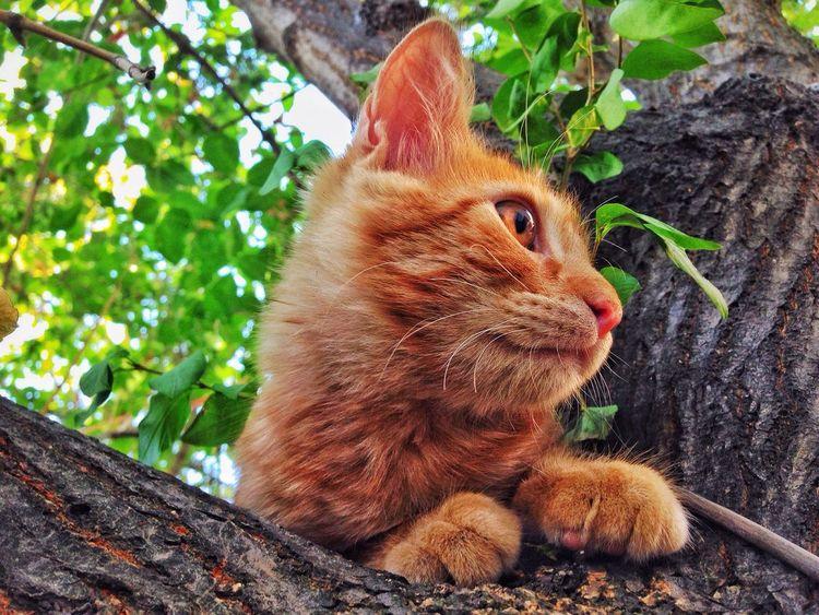Santiago De Chile First Eyeem Photo Winter Amimals Cat