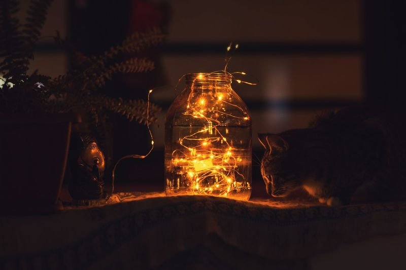 Close-up of illuminated string lights in jar by cat on table at home