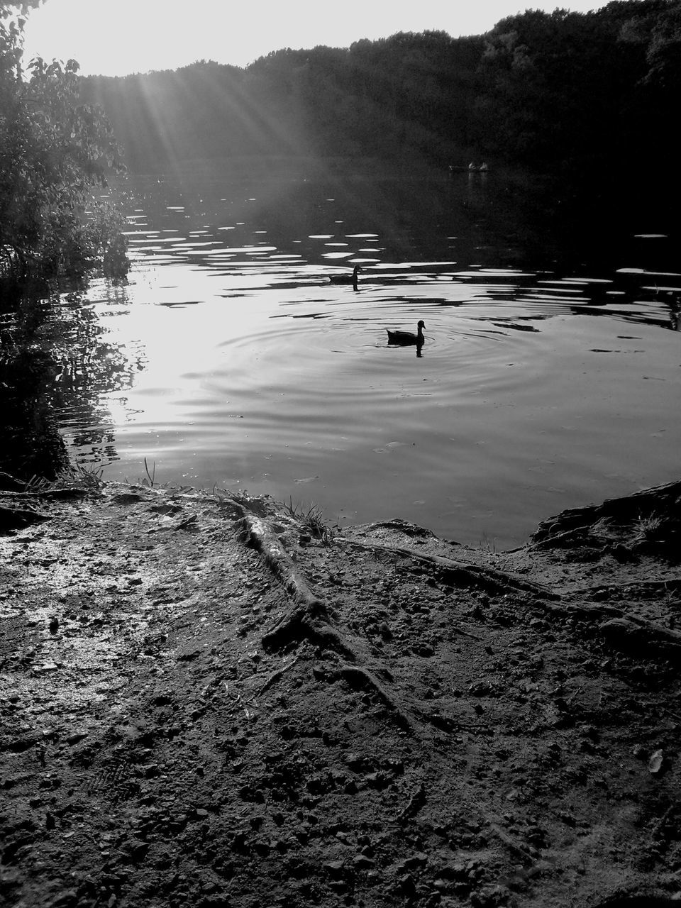 water, nature, lake, outdoors, tree, tranquility, day, animal themes, beauty in nature, no people, bird, scenics, animals in the wild, sky