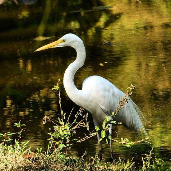 Birds Caracas Venezuela Garza ParqueDelEste Nature's Diversities