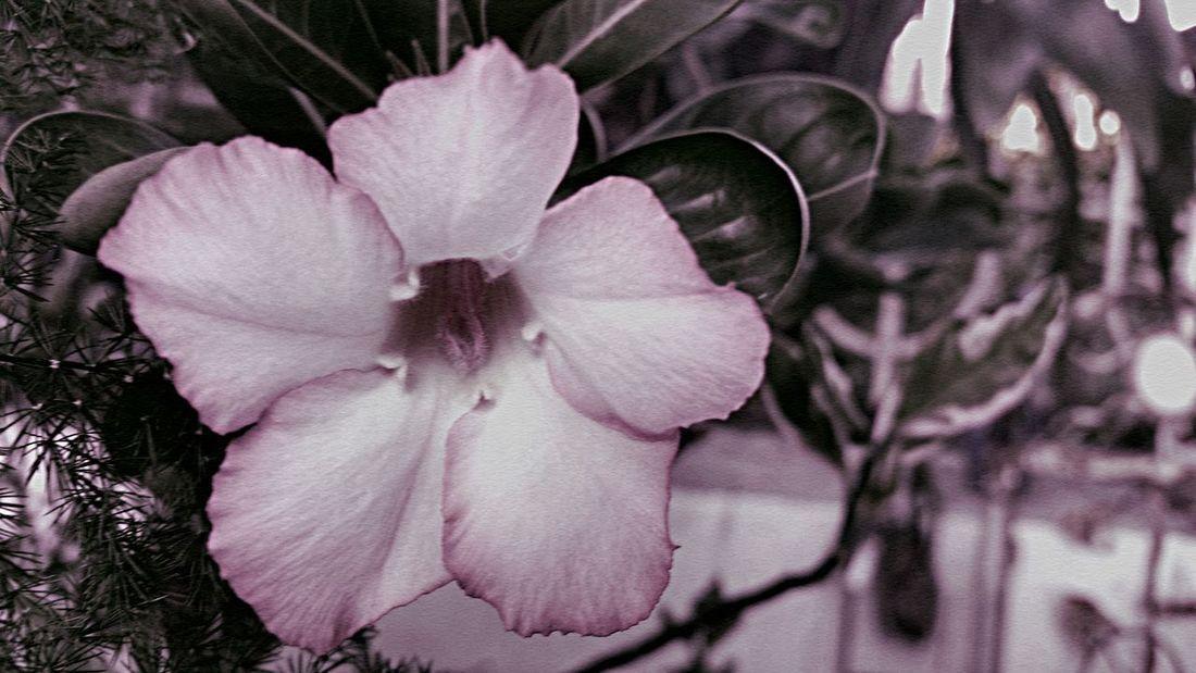 Flower Beauty In Nature Nature Blackandwhite St. Croix USVI