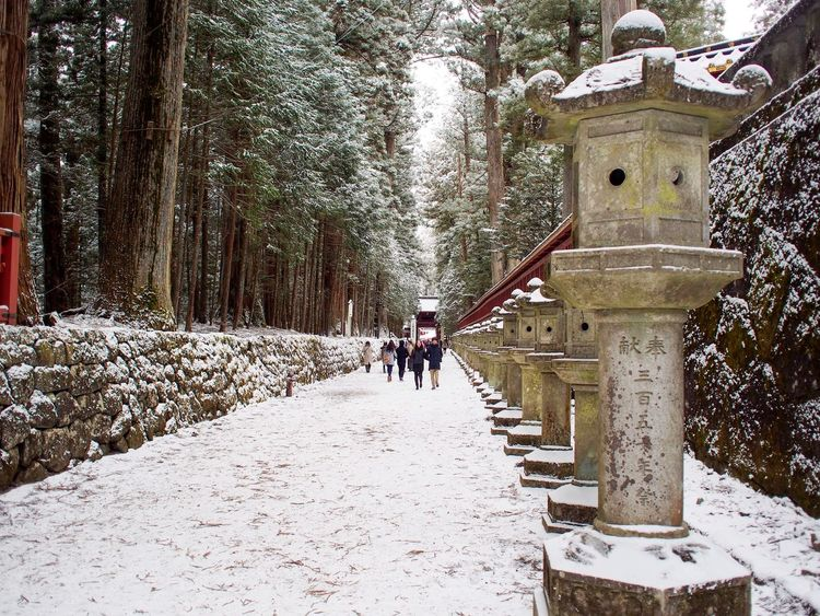 Tree Winter Snow Real People Day Cold Temperature Outdoors Nature One Person Men People Adults Only Adult Only Men Shrine Shrine Of Japan Sandō Approach To Shrine Nikko in Tochigi Japan