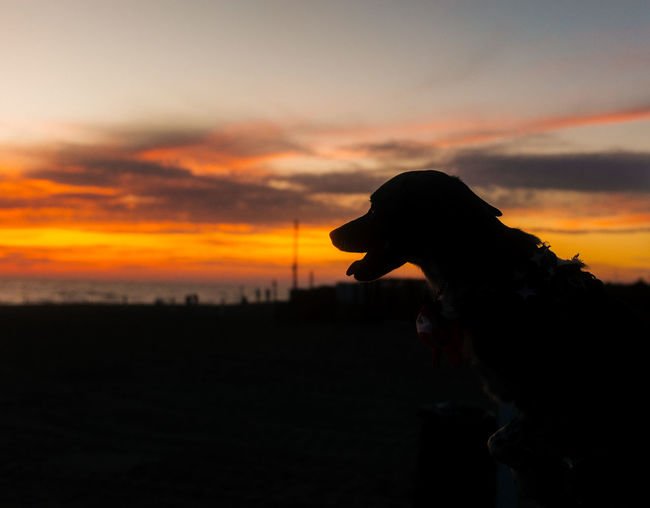 Silhouette of dog on landscape at sunset
