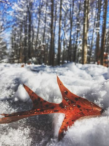 Another Two Leaf Winter Cold Temperature Snow Nature Weather Beauty In Nature Frozen No People Scenics Outdoors Day Field Tree Close-up