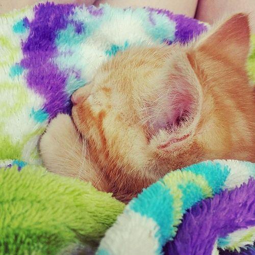 Sleepy Sumah Gingerkitty Orangekitty