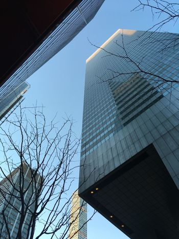 Low Angle View Building Exterior Architecture Built Structure Modern Clear Sky Bare Tree Outdoors No People Skyscraper City Day Sky