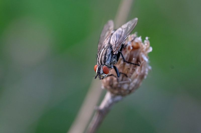 Close-up of fly on plant