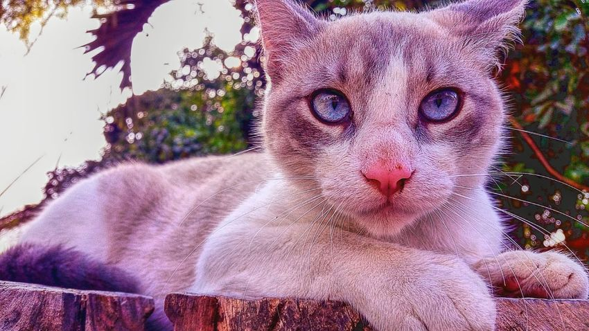 ojos galaxia Eyes Cat Blue Colors Gato Mascota Felino Photography Colorful Colombia Home Nature