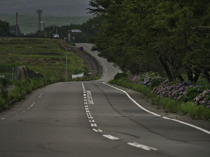Hydrangea road