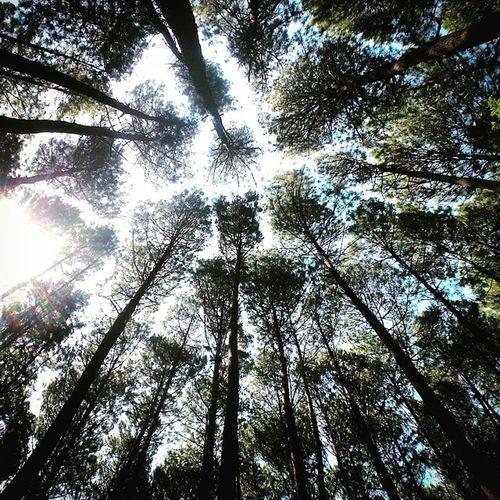 Hanya kecil dihadapan tuhan. Cukup jauh untuk menggapai langit biru Explorejogja HutanPinus Hutan HappyFasting Generasi Freshman Vscocam Sunday Greenday Bumi Earthday Earth Glasses Zenfone5 Happy Kerengan