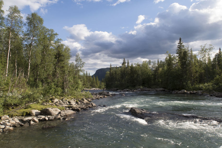 Beauty In Nature Colors Flowing Flowing Water Forest Growth Harmony Hiking Adventures Idyllic Kungsleden Lush Motion Nature No People Outdoors River Scenics Tranquil Scene Tree Water Woods