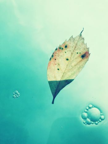 Leaf No People Water Nature Invertebrate Animal Wildlife Beauty In Nature High Angle View Blue