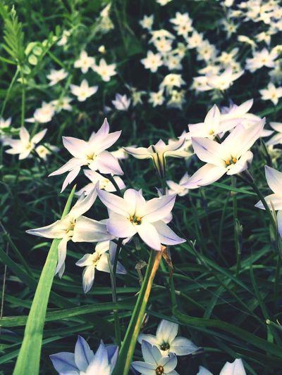なんていう花なんだろうw