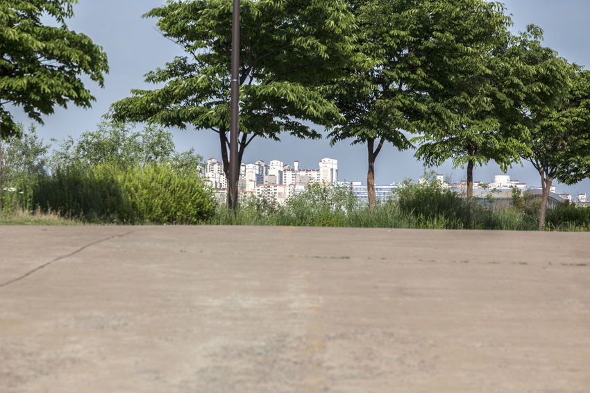 Beauty In Nature Blue Day Empty Grass Green Green Color Growth Hangang Park Landscape Nature No People Non-urban Scene Outdoors Plant Remote Riverside Rural Scene Scenics Sky The Way Forward Tranquil Scene Tranquility Tree