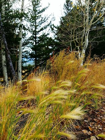 Wild Grasses Tranquility Outdoors Beauty In Nature Looking Out Over The Mountain Windy Days  Peaceful View