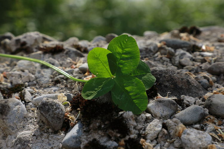 Close-up of small plant growing on rock