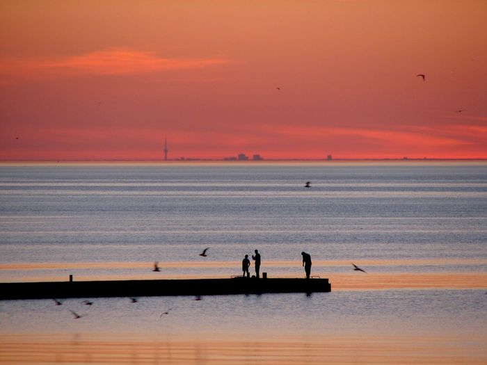 Fishermen, birds & Toronto. Canada CN Tower Fishermen Lake Ontario Lake Ontario CN Tower Learn & Shoot: Balancing Elements No Edit/no Filter Orange Color Seabirds Silhouettes Sunset Toronto Unrecognizable Person The Traveler - 2018 EyeEm Awards